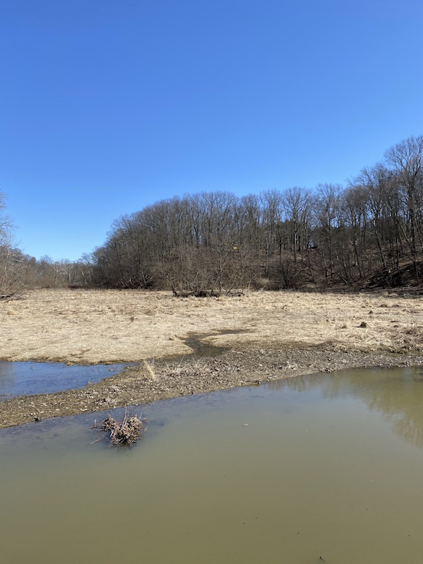 the upper lake at Mt. Gilead State Park.