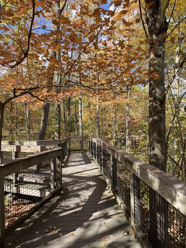 boardwalk in Inniswood Metro Gardens, Westerville Ohio