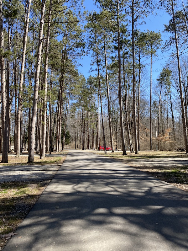 campsite areas at Mt. Gilead State Park