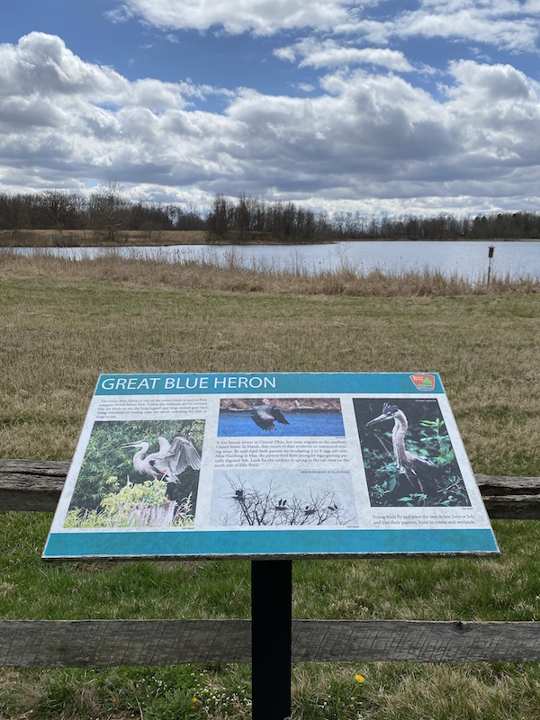 Great Blue Heron Viewing area at Pickerington Ponds Metro Park.