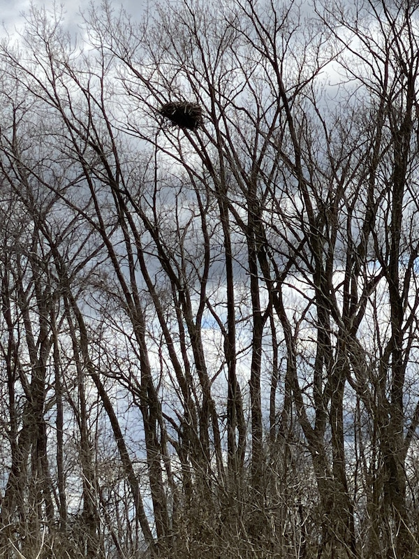 eagle's nest at Pickerington Ponds Metro Park.