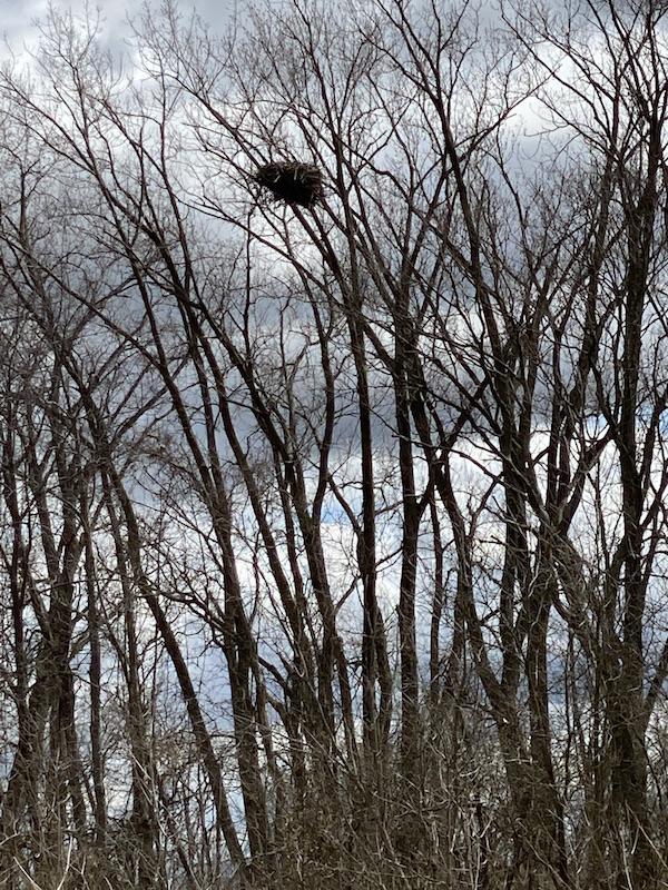 eagle's nest at Pickerington Ponds Metro Park.