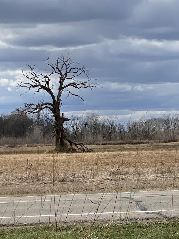 Osprey nest at Pickerington Ponds Metro Park.