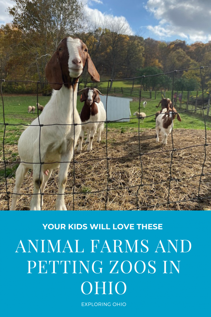 Your Kids Will Love These Animal Farms and Petting Zoos in Ohio.