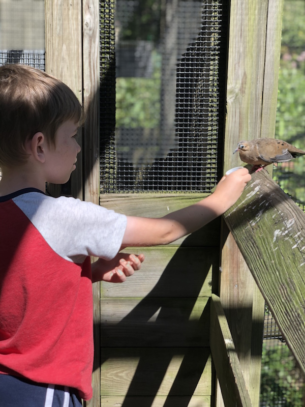 boy feeding a bird at Ohio Bird Sanctuary.