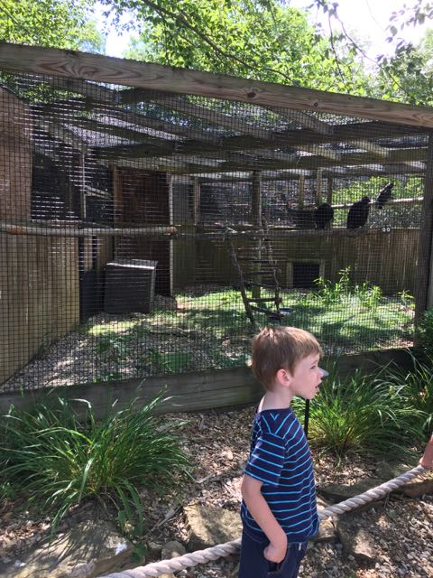 boy in front of the bird cage at Ohio Wildlife Center.