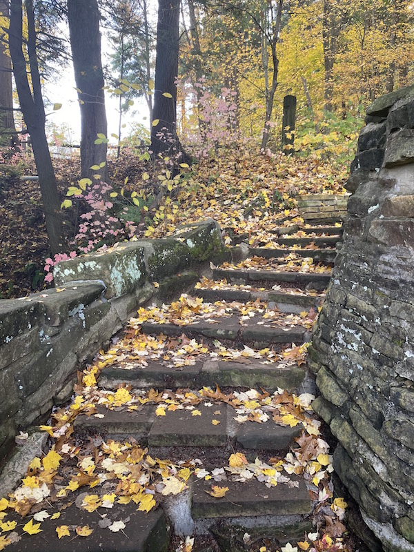 steps going down to the Overlook at Clear Fork Gorge.