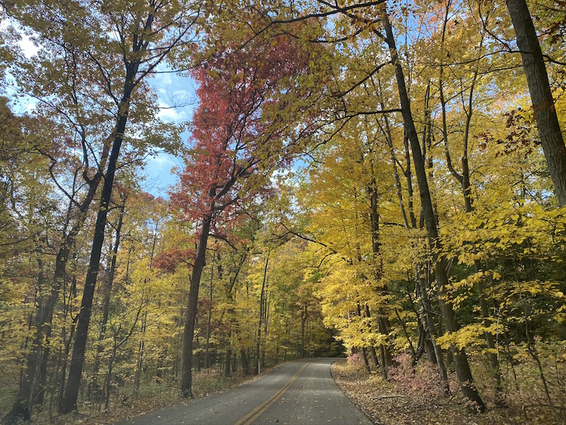 fall color trees along the road in Mohican State Park.