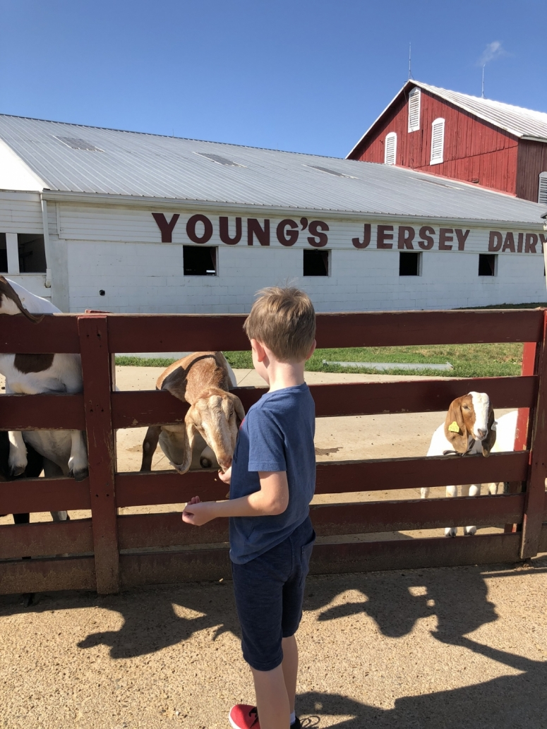 boy feeding a goat at the petting zoo at Young's Jersey Dairy in Ohio.