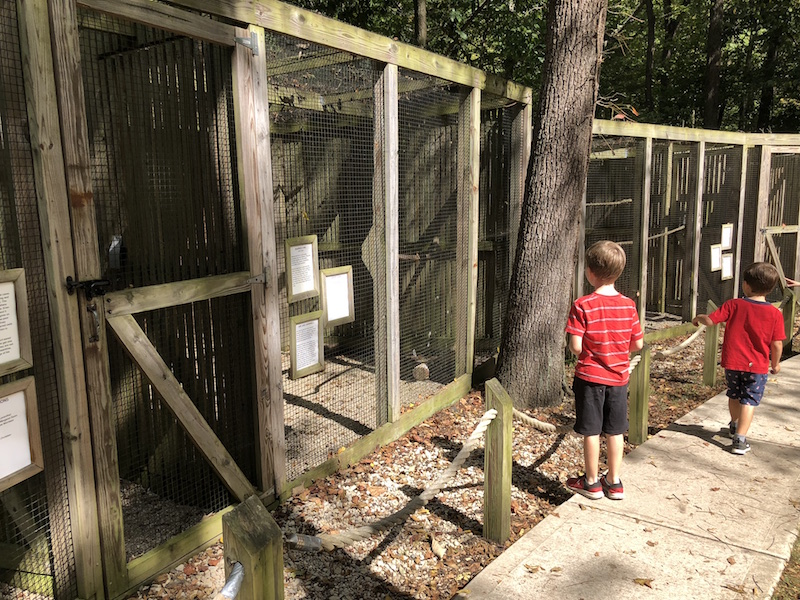 boys looking at the birds at Glen Helen Raptor Center in Yellow Springs, Ohio.