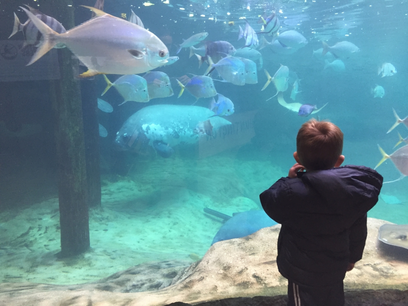 boy looking at fish at the aquarium at Columbus Zoo in Ohio.