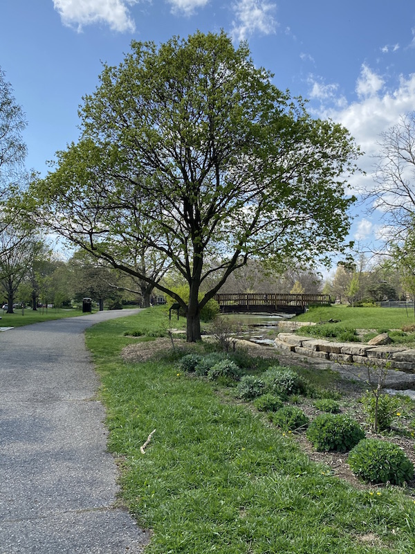A walking path and bridge in Franklin Park.