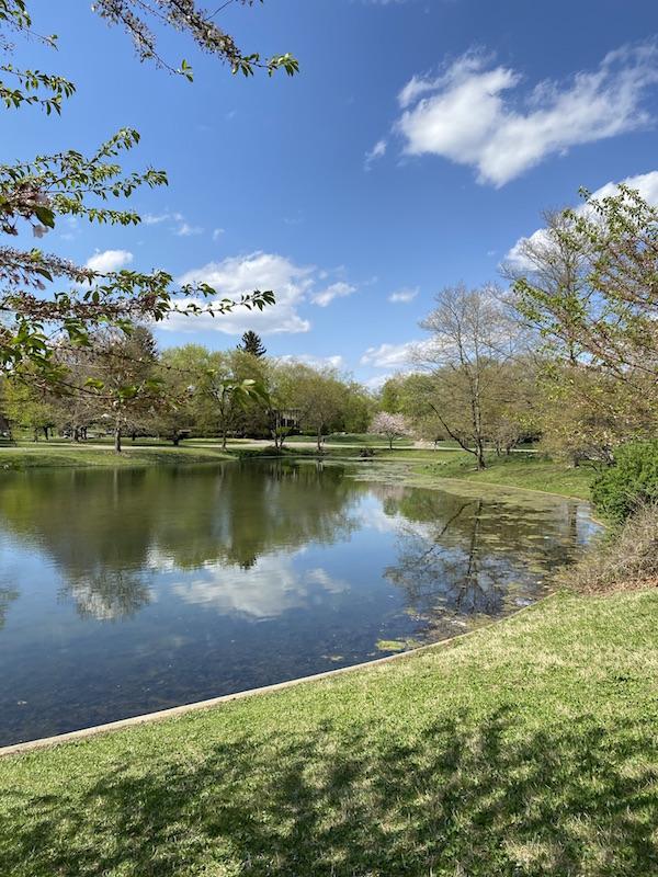 The pond at Franklin Park.