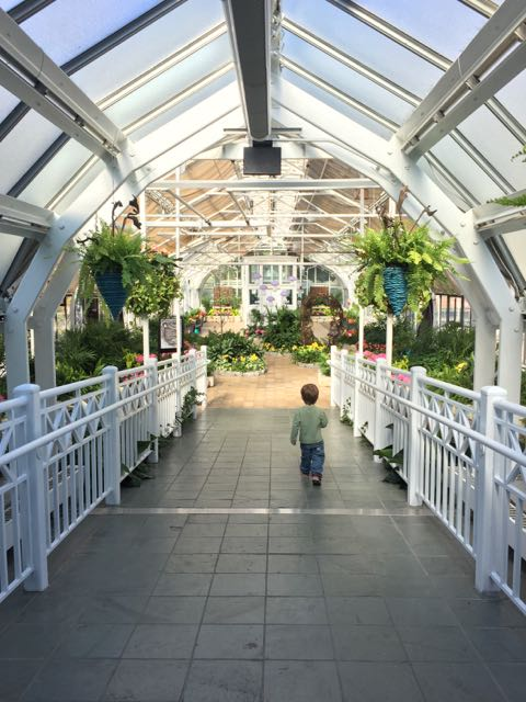 A boy walking inside Franklin Park Conservatory.