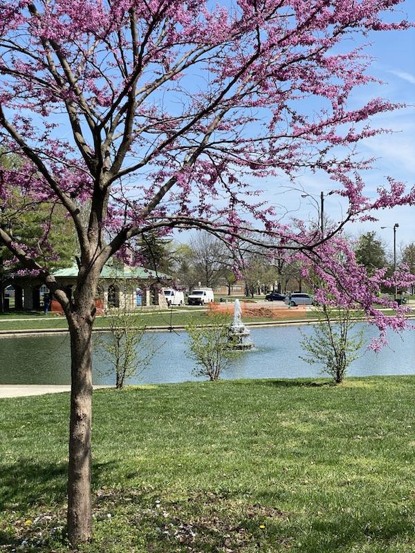 pond in westgate park columbus.